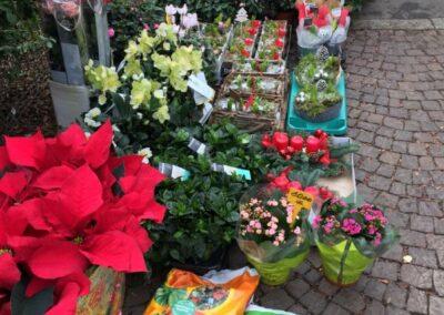 negozio di piante floreali