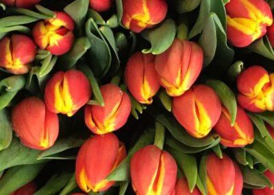 bouquet di tulipani rossi e gialli