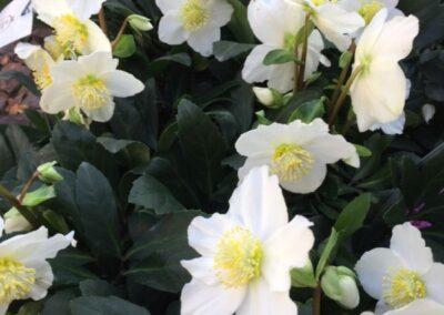 piante di fiori esotici